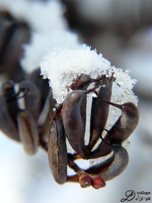 6-seeds