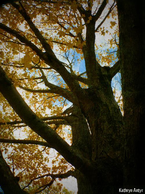 4-Tree