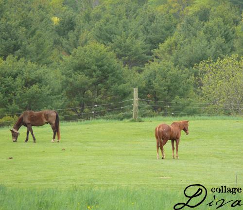 100-horses