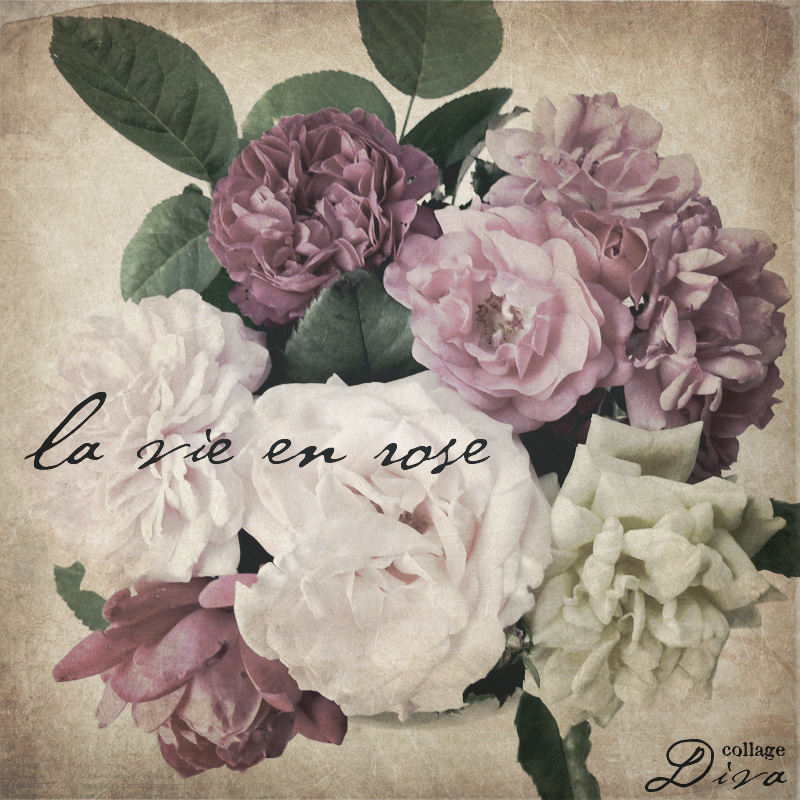 Roses800