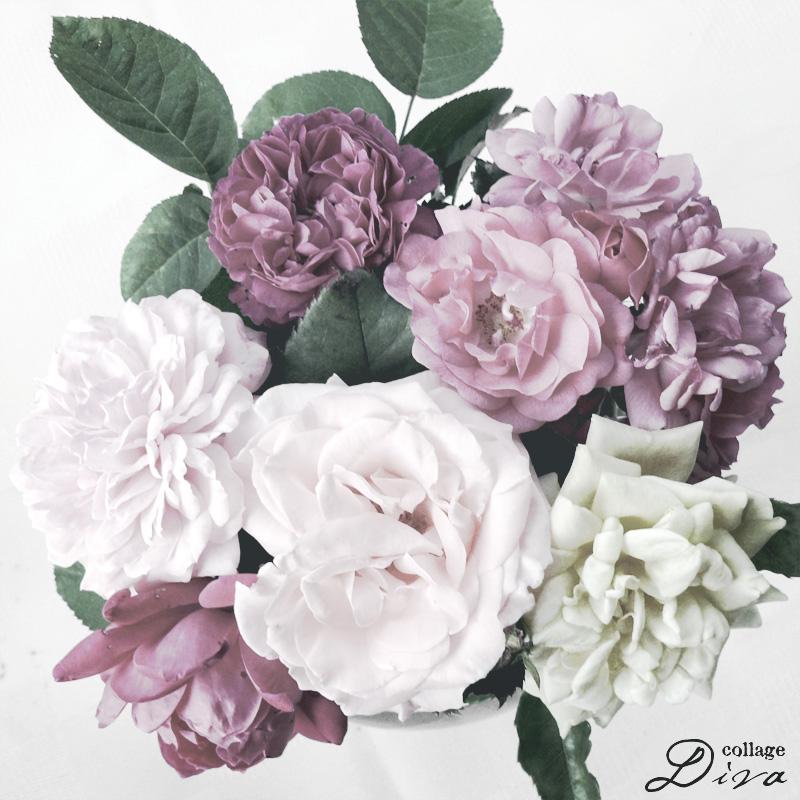 Roses800sans