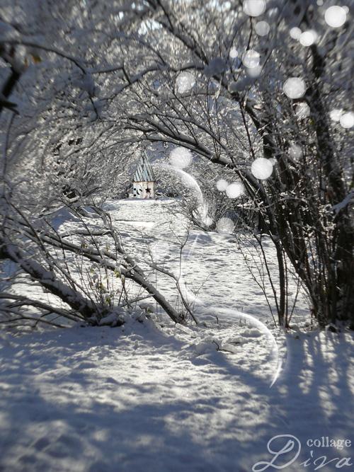 4-snowyforest