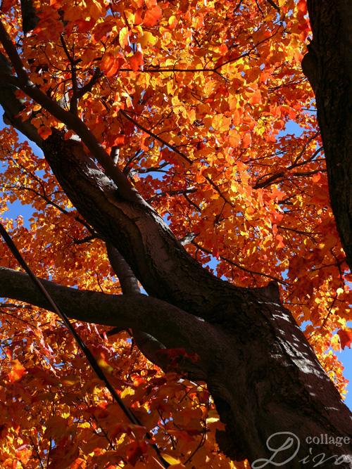 4-tree-orange