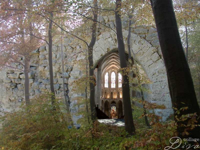 Cathedral-in-forest
