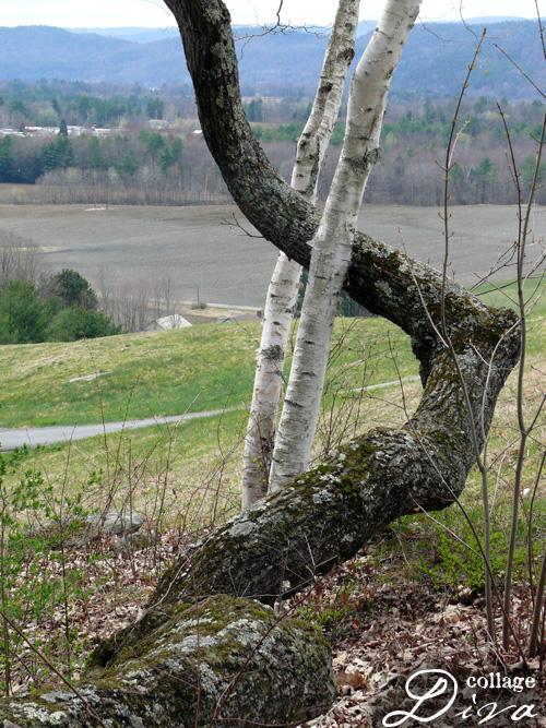 4-tree-embrace