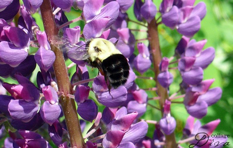 13-bee