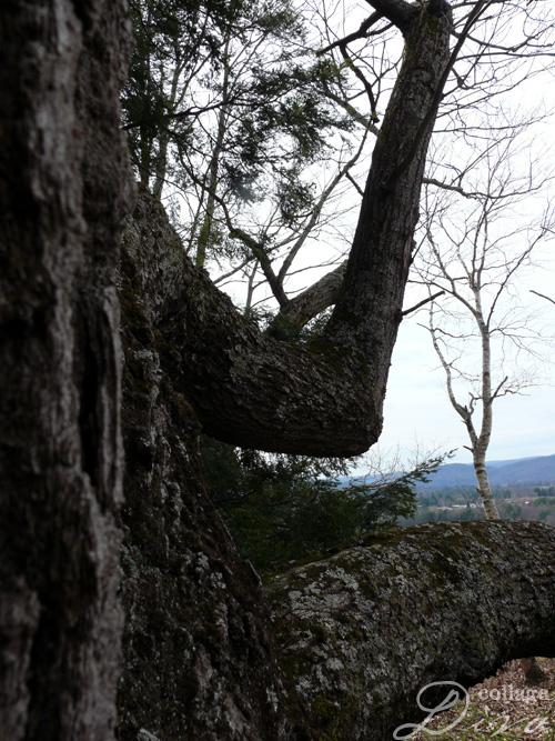 5-tree-arm