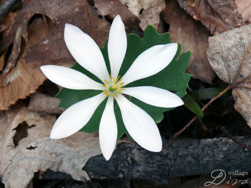 10-whiteflower