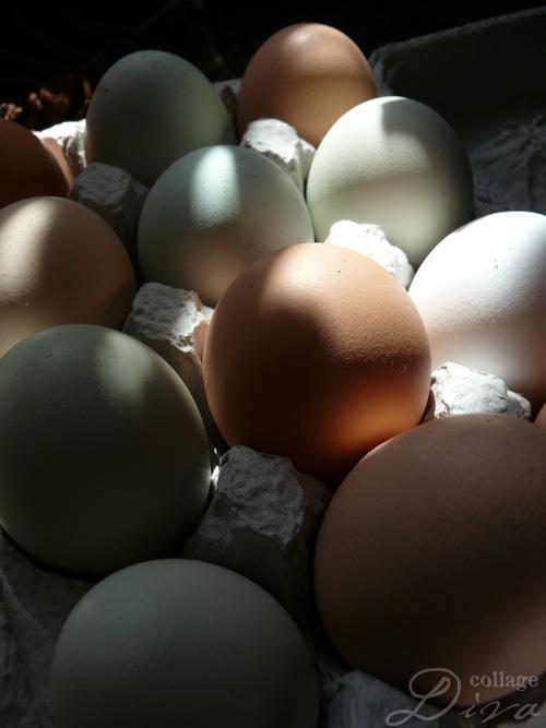 1-eggs