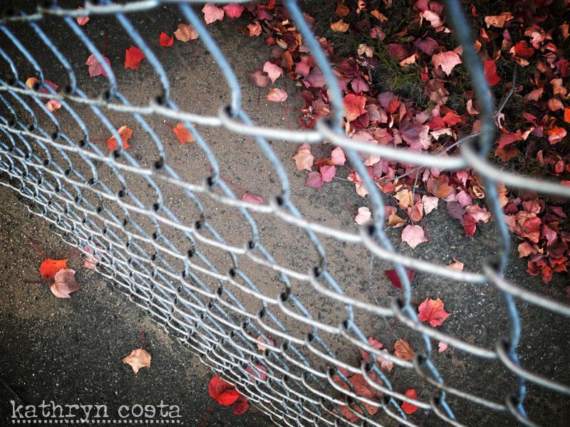 1-fence