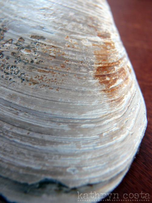 6-shells