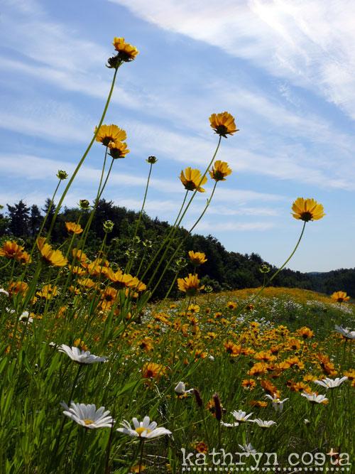 6-FlowersHighway2012