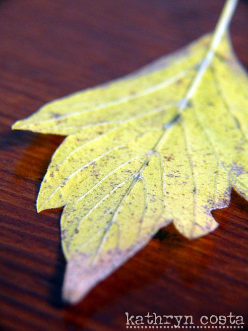 3-leaf