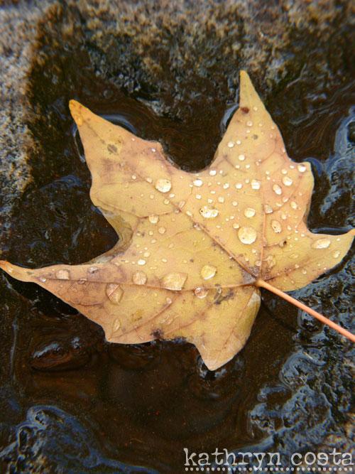 2-leaf