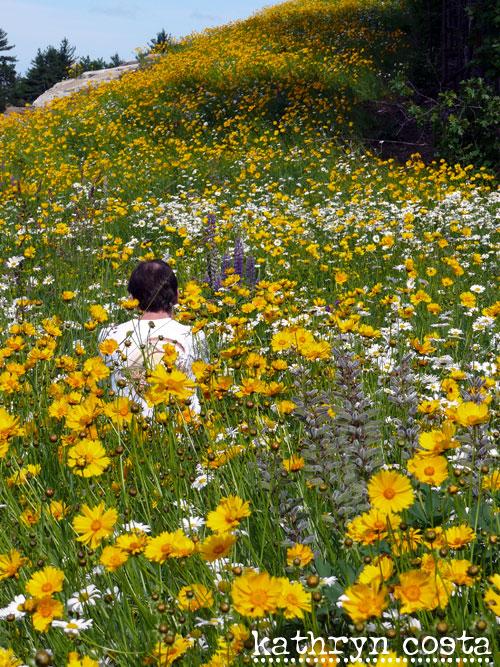 3-FlowersHighway2012