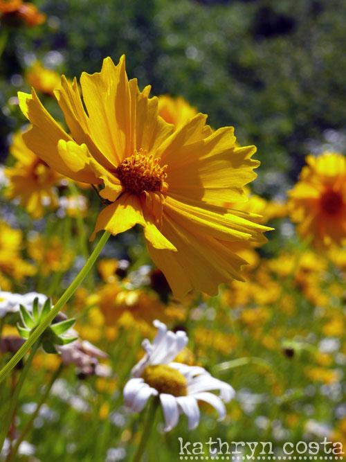 4-FlowersHighway2012