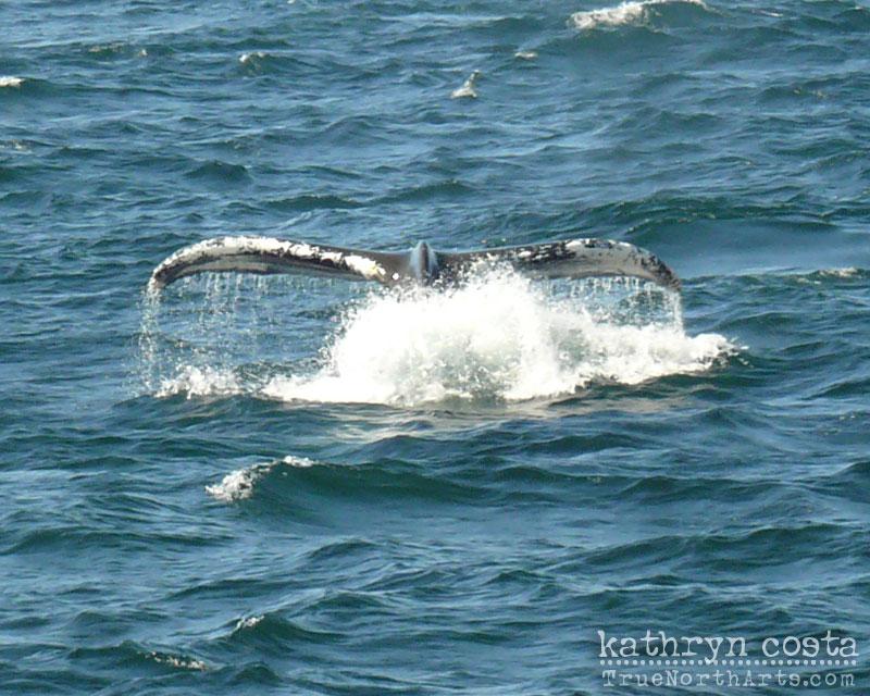 2-whalewatch2013