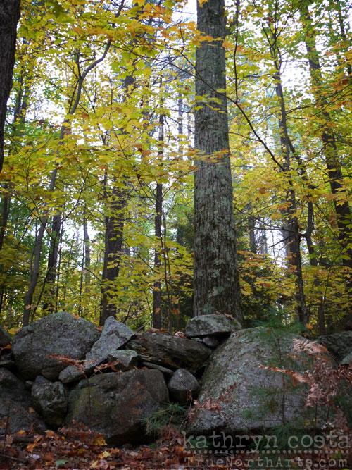 6-Woods
