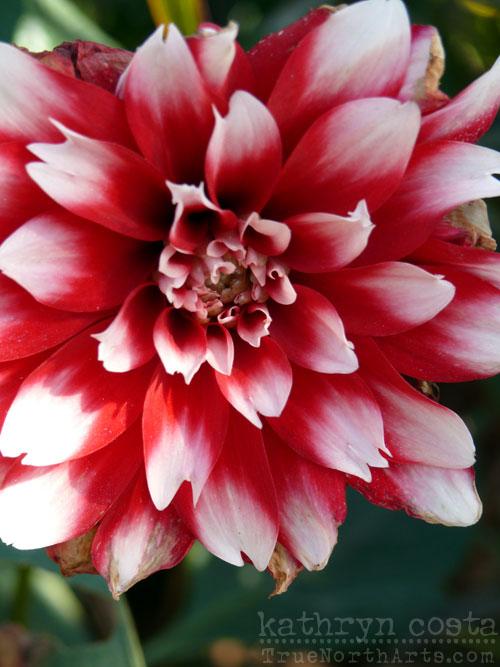 15-flowers