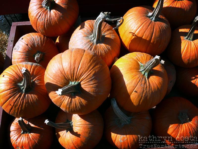 Autumn Pumpkin Carving Beautifully Carved Pumpkin