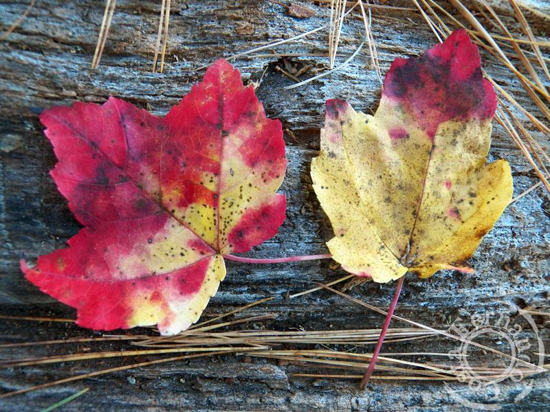 4-AutumnMassabesic