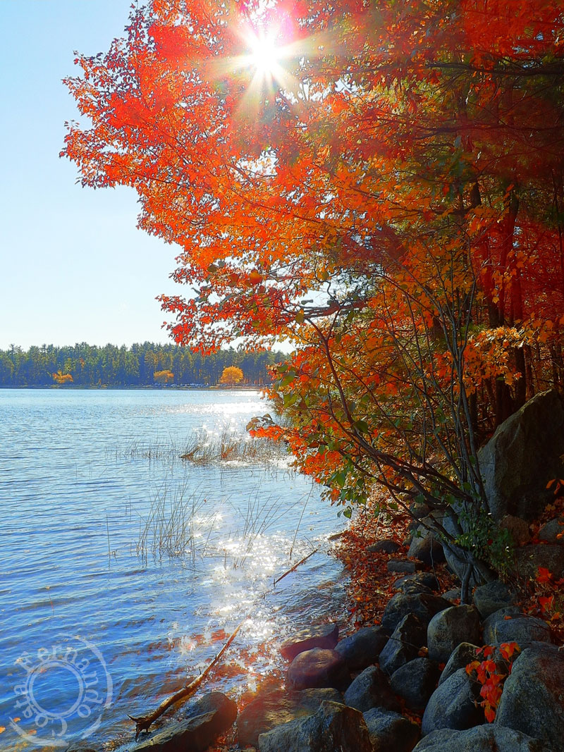 1-AutumnMassabesic