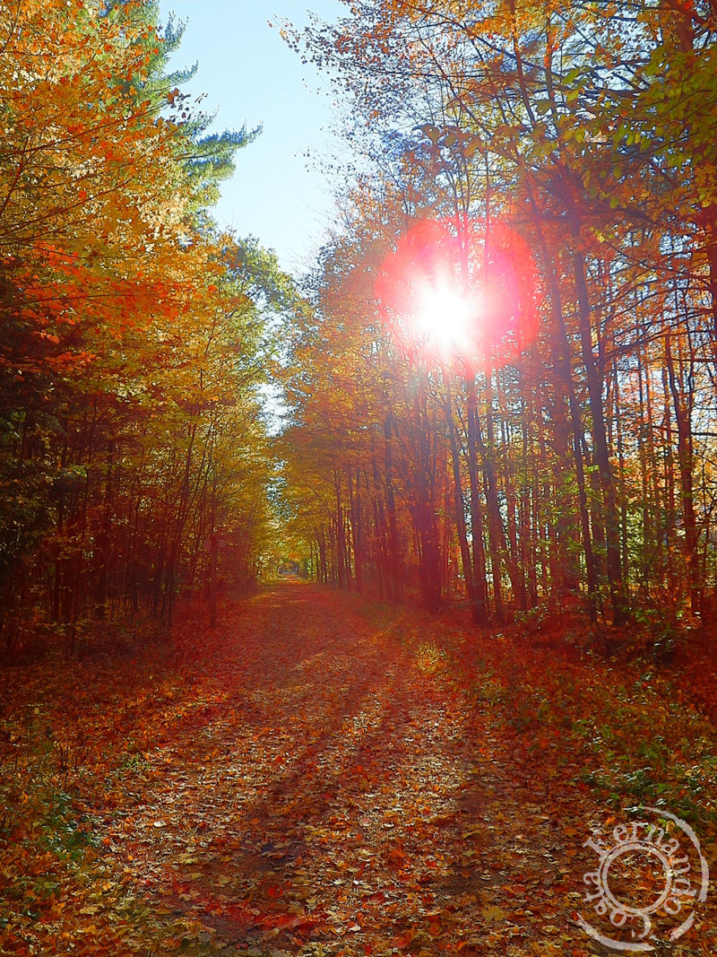 8-AutumnMassabesic