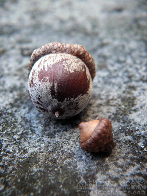 13-acorns