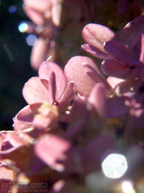 Light1-hydrangea