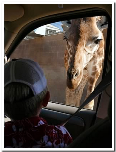 8-giraffe-encounter2007