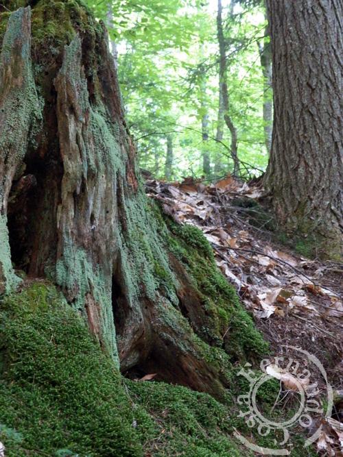 22-stump