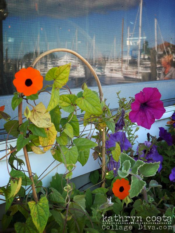 16-Camden-FlowerBoxes