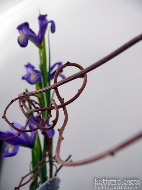 3-Iris