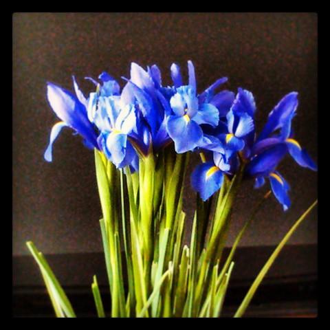 Instagram-Iris
