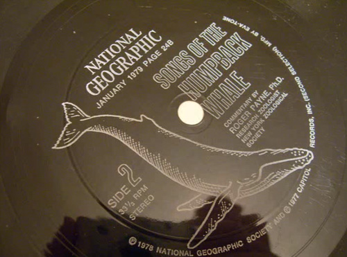 6-NatGeo-WhaleSong