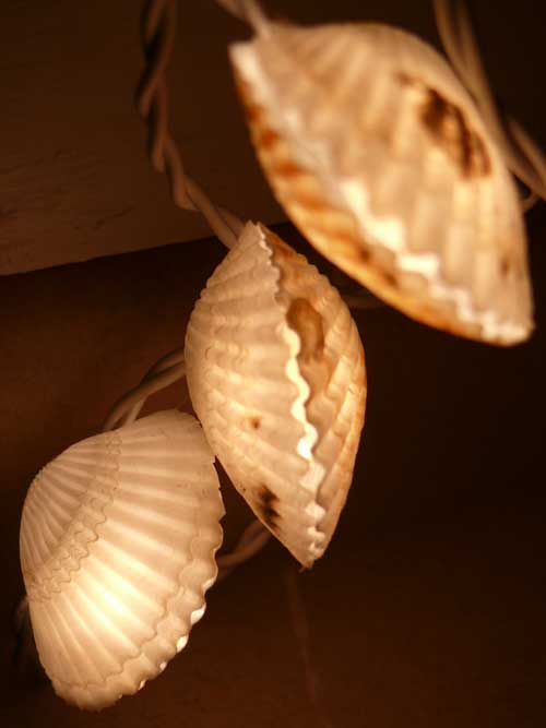 Shelllights1